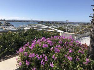 Flowers in San Diego